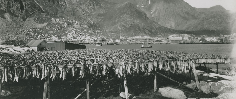 Black & white image of fish being dried via an old process/tradition